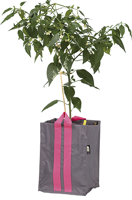 Plantkasse Blueberry Medium Antracit 21l